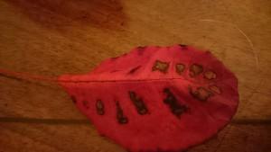 mindfulness leaf